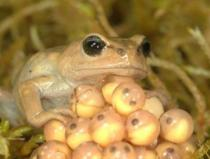 Froggie went a courtin'